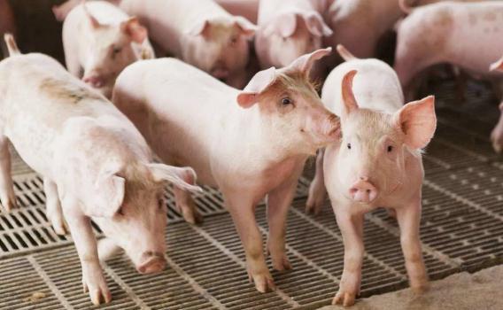 """猪肉价格为何大涨?为什么吃不起猪肉?二师兄""""的肉可能比师父的还贵-汇美优普-热门搜索话题榜"""