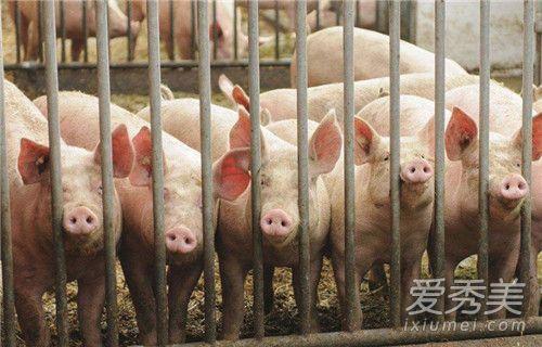凤阳非洲猪瘟疫情怎么回事 凤阳非洲猪瘟疫情具体情况-汇美优普-热门搜索话题榜
